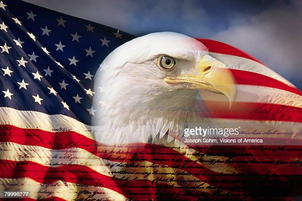 bald eagle head and american flag - bald eagle with american flag stock pictures, royalty-free photos & images