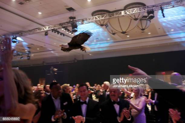 A bald eagle named Challenger flies across the room during Muhammad Ali's Celebrity Fight Night XXIII at the JW Marriott Desert Ridge Resort Spa on...