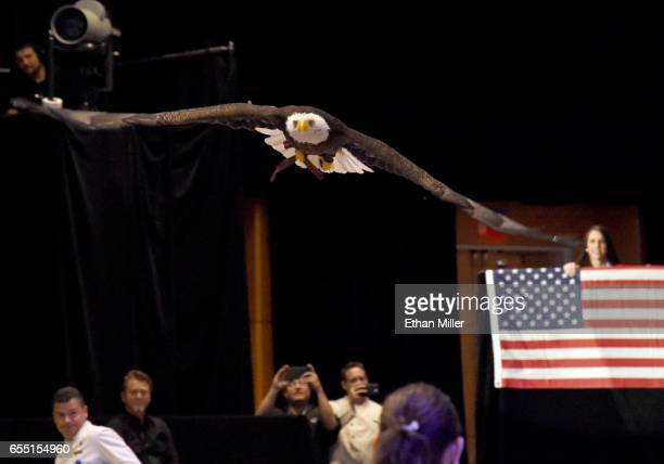 A bald eagle named Challenger flies during a rehearsal for Muhammad Ali's Celebrity Fight Night XXIII at the JW Marriott Desert Ridge Resort Spa on...