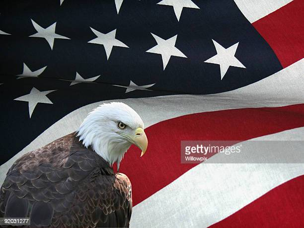 Bald Eagle on a Rough Textured Cloth American Flag Background