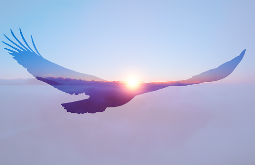 Bald eagle on sunset sky background. 965210336