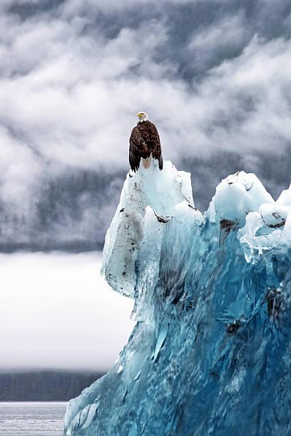 Bald Eagle On The Glacier Wall Art