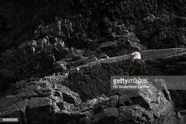 A bald eagle perched on a rock wall