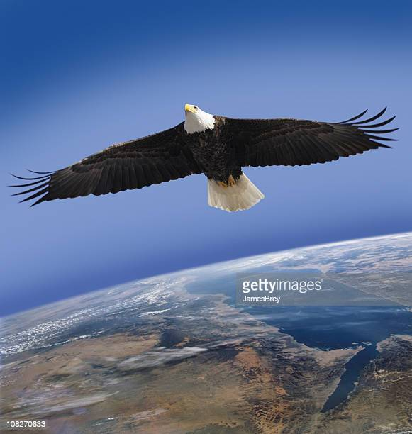 bald eagle, symbol of america, flying high over planet earth - spread wings stock pictures, royalty-free photos & images