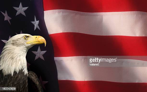 bald eagle with american flag close up - bald eagle with american flag stock pictures, royalty-free photos & images