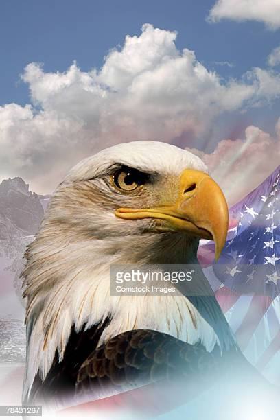 bald eagle with american flag - vaderlandsliefde stockfoto's en -beelden