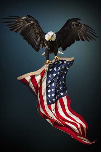 Bald Eagle with American flag 857739866