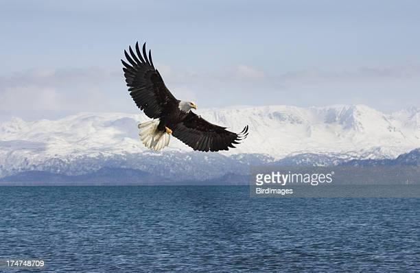 Bald Eagle with Mountian Background, Alaska