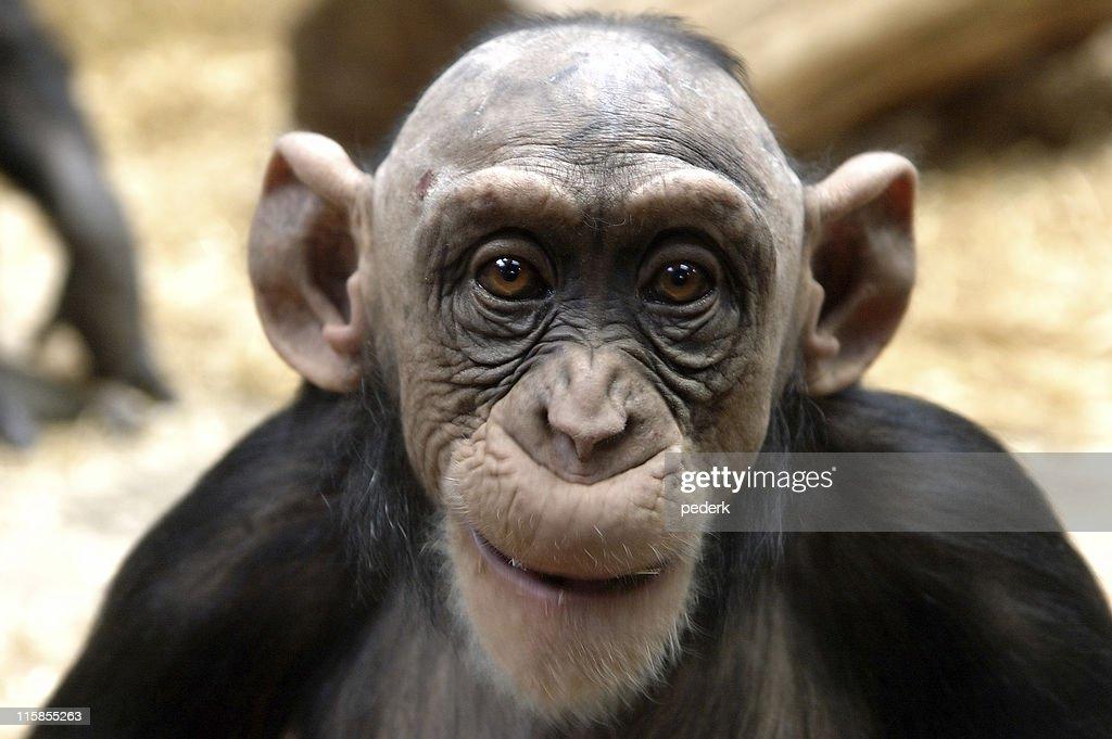 Shaved Ape Com