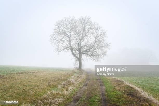 bald tree in the fog beside weg, odenwald, germany - weg fotografías e imágenes de stock