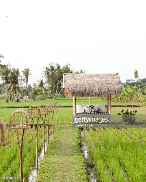 A bale in the middle of the rice fields at Sardine restaurant
