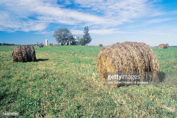 Baled hay in field Centerville Eastern Shore MD