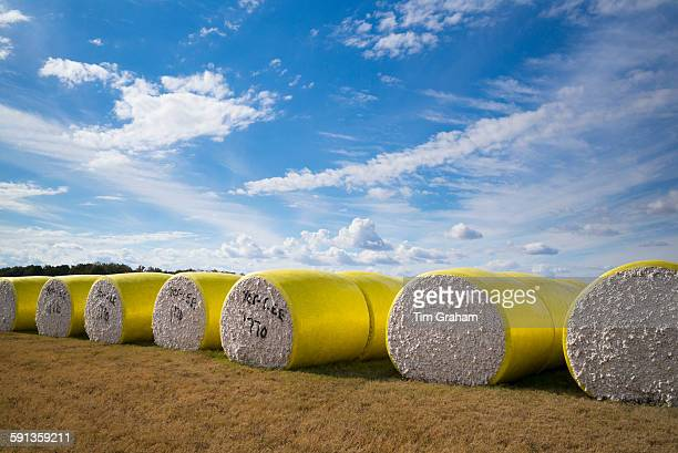 Bales of cotton at plantation along the Mississippi Delta at Tensas Coop Gin Inc near Tallulah Louisiana USA