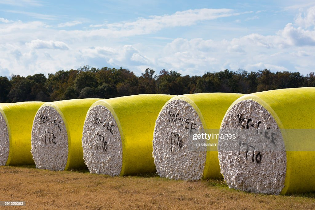 Cottton Bales in Louisiana, USA : News Photo