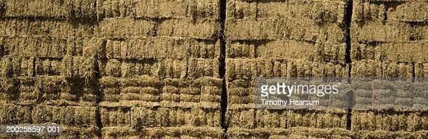 bales of freshly cut alfalfa, spring - timothy hearsum bildbanksfoton och bilder