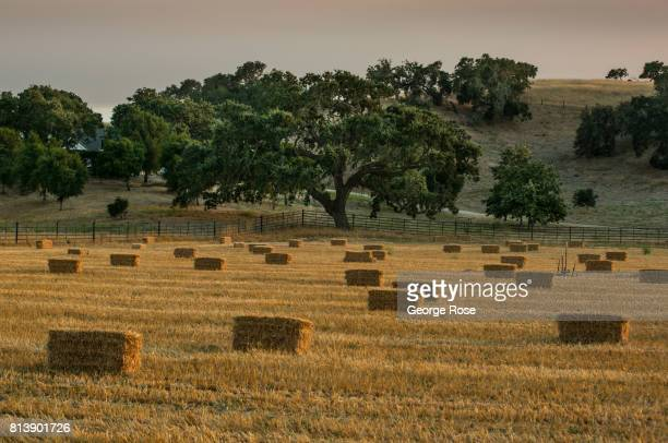 Bales of hay along Foxen Canyon Road are viewed near sunset on July 9 near Los Olivos, California. Because of its close proximity to Southern...