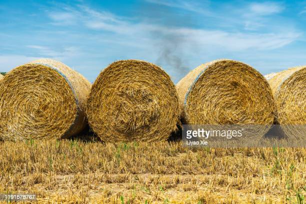 bales of hay in a field - liyao xie stock pictures, royalty-free photos & images