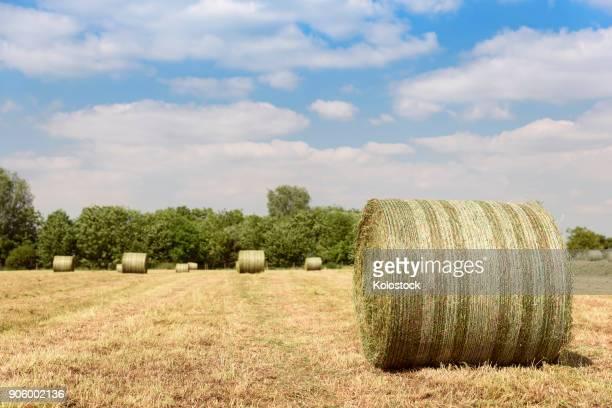 bales of hay in field - boston lincolnshire - fotografias e filmes do acervo