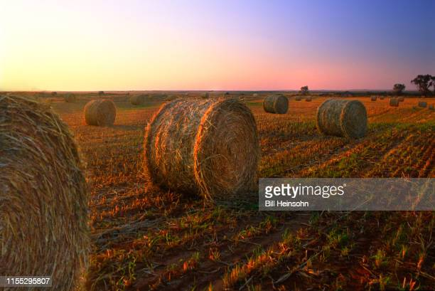 bales of hay - irving texas stock photos and pictures