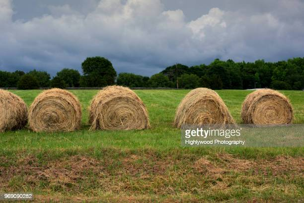 bales of hay with storm clouds waiting - highlywood stock pictures, royalty-free photos & images