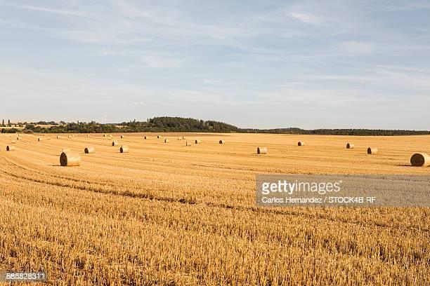 Bales of straw on field, Brandenburg, Germany