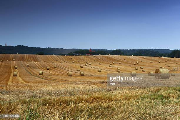 Bales of wheat on a large agricultural plain