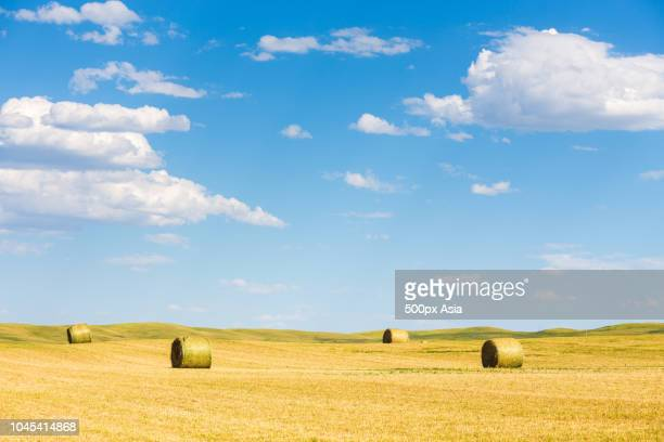 bales on field, canada - image stock pictures, royalty-free photos & images
