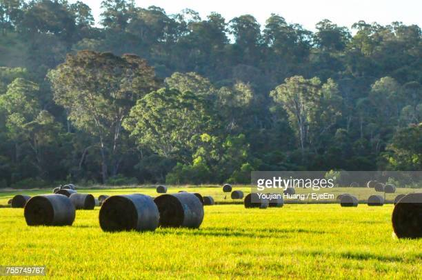 Bales Rolled Up On Grassy Field Against Trees During Sunny Day