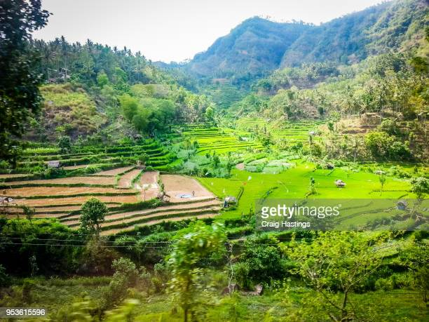 bali rice fields indonesia - ubud district stock pictures, royalty-free photos & images