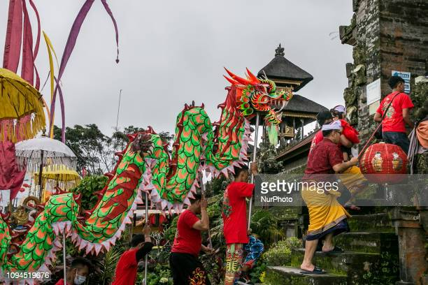 Balinese ethnic Chinese dragon dancers walks into the temple as they take parts during Balingkang Kintamani Festival parade to celebrate Chinese New...