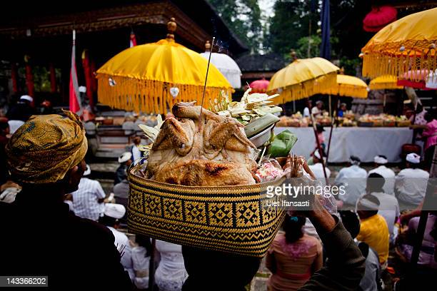 Balinese man carries offerings during the sacred 'Aci Keburan' ritual at Nyang Api Temple on February 16 2012 in Gianyar Bali Indonesia Cockfighting...