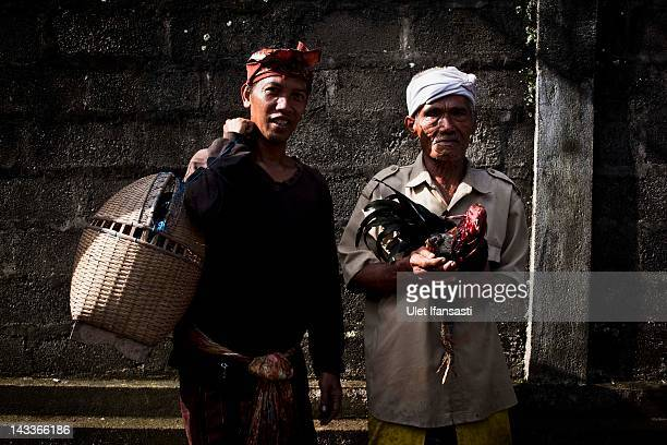 Balinese man holds a rooster during the sacred 'Aci Keburan' ritual at Nyang Api Temple on February 14 2012 in Gianyar Bali Indonesia Cockfighting in...