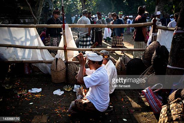 Balinese man prays before the cockfighting begins during the sacred 'Aci Keburan' ritual at Nyang Api Temple on February 13 2012 in Gianyar Bali...