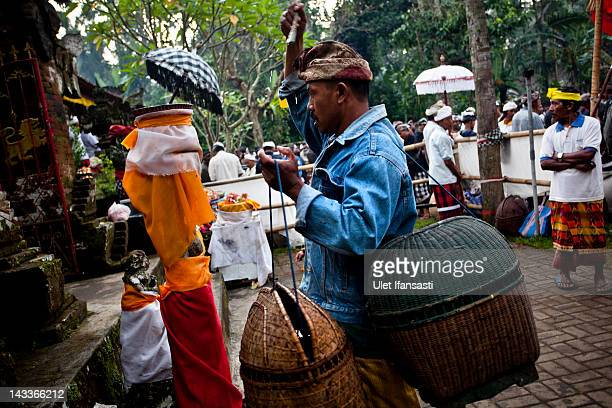 Balinese man sprays holy water to his body before his rooster fights during the sacred 'Aci Keburan' ritual at Nyang Api Temple on February 16 2012...