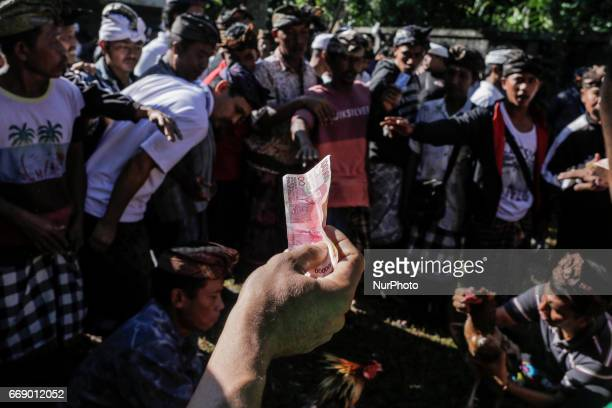Balinese men bet for a rooster before fighting during the sacred Aci Keburan ritual at Nyang Api Temple in Gianyar Bali Indonesia on on April 16th...