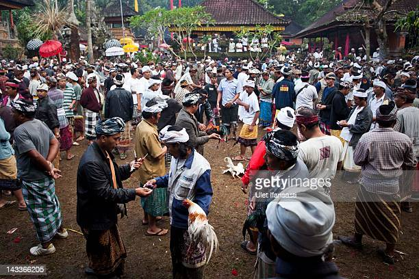 Balinese men dressed in traditional costumes gather for the cockfighting during the sacred 'Aci Keburan' ritual at Nyang Api Temple on February 16...
