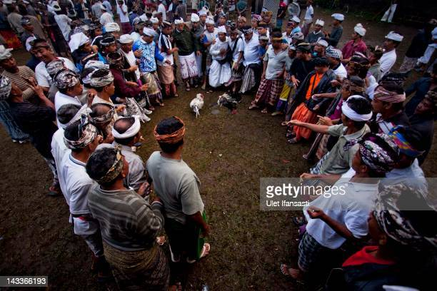 Balinese men dressed in traditional costumes watch as the roosters fight during the sacred 'Aci Keburan' ritual at Nyang Api Temple on February 13...