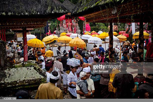 Balinese pray during the sacred 'Aci Keburan' ritual at Nyang Api Temple on February 16 2012 in Gianyar Bali Indonesia Cockfighting in Bali known as...