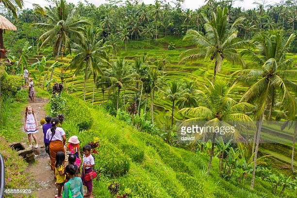 balinese rice paddy hawkers - rice terrace stock pictures, royalty-free photos & images