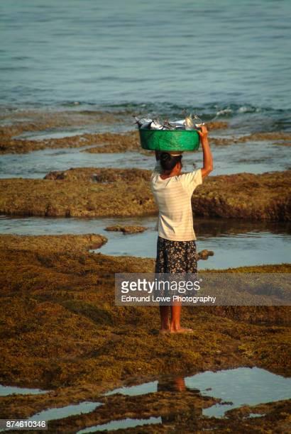Balinese Woman Hauls Fish in a Bucket.