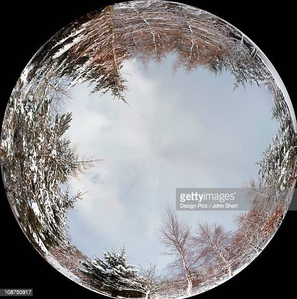 A Ball Reflecting A Forest Around It's Edges