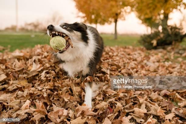 Ball Snatch