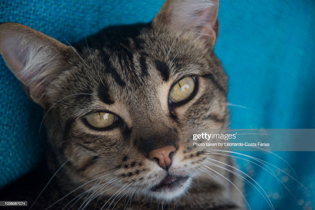 Ball, the cat : Stock Photo