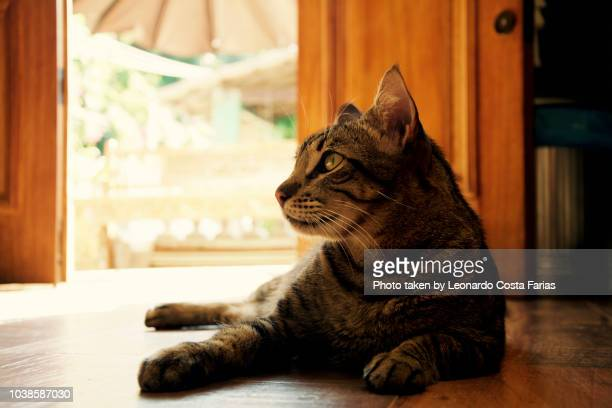 ball, the model cat is posing - leonardo costa farias stock photos and pictures