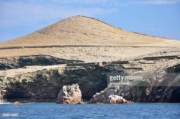 Ballestas Islands Guano and Sea Birds, Paracas, Pe