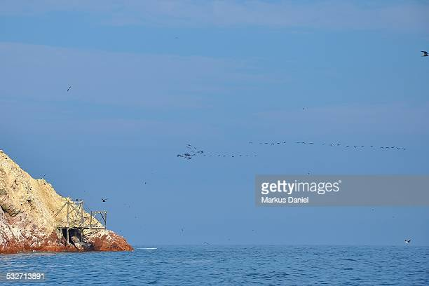 "ballestas islands guano dock and birds - ""markus daniel"" stock-fotos und bilder"