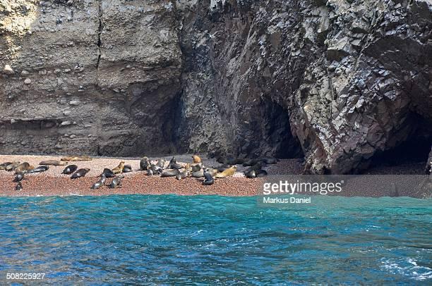 Ballestas Islands Sea Lions colony