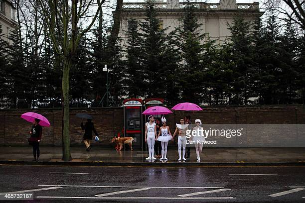 Ballet dancers wait to cross the road to join Amnesty International activists for a photocall outside the Russian Embassy in London on January 29...
