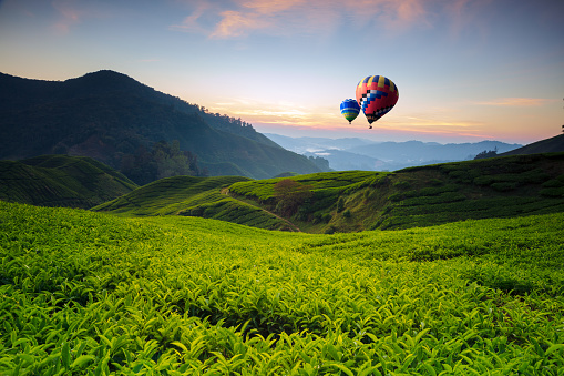 Balloon and landscape viewpoint on the top of sunrise at cameron highland, tea valley and sunrise in Malaysia - gettyimageskorea