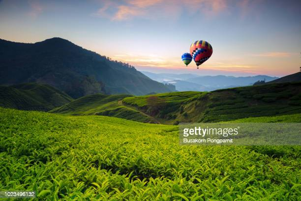 balloon and landscape viewpoint on the top of sunrise at cameron highland, tea valley and sunrise in malaysia - malaysia stock pictures, royalty-free photos & images